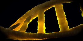 DNA in strafzaken (deel 3, verdieping strafrecht)